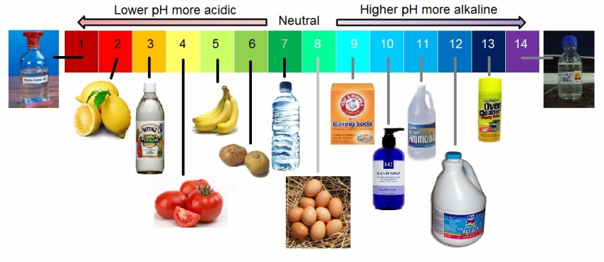 an experiment determining the effect of acids and bases on different indicators and the ph of common
