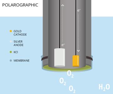 Иллюстрация конструкции полярографических электродов для измерения растворенного кислорода